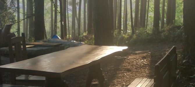 日比谷公園でウォーキングフラワーセラピー