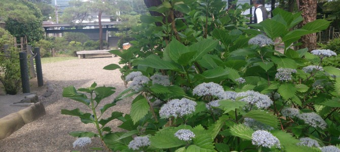 6月初夏の美しい庭園、吉川英治記念館特別レッスン