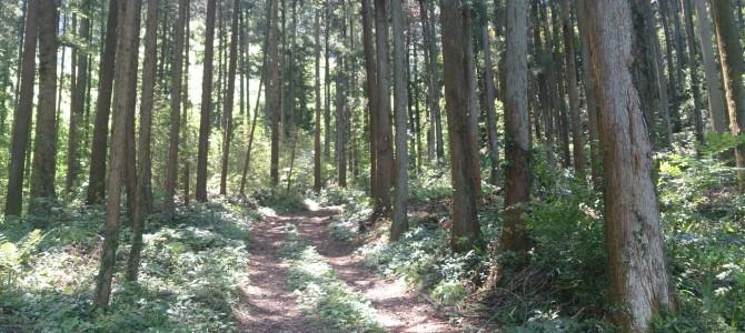 5月の森のフラワーセラピーレッスン