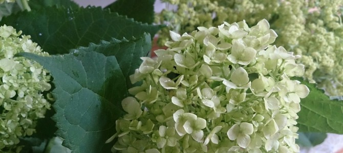第8回 食とお花のコラボレッスン