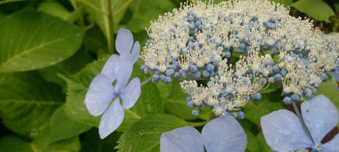 花が開くには時がある~内なる力を開くフラワーセラピー