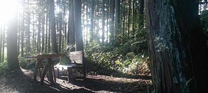 秋の森へ いらっしゃい♪