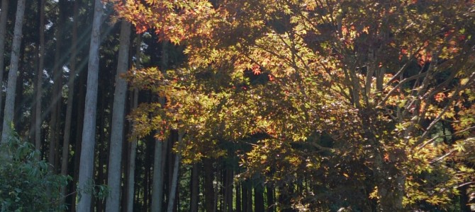 第7回 Forestday~森カフェレポ~