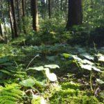 森の朝~私に還る時間~