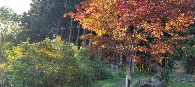 11月の森カフェ☕~10周年感謝祭~