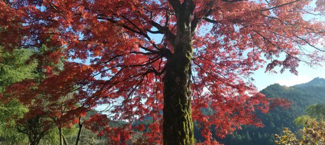 大人の遠足~あきる野紅葉狩りミステリーツアー