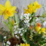 春分を迎えるために~3月のオススメフラワーセラピーin秋川