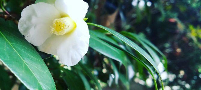 新春!吉川英治記念館~雅~お花とお箏のしらべ