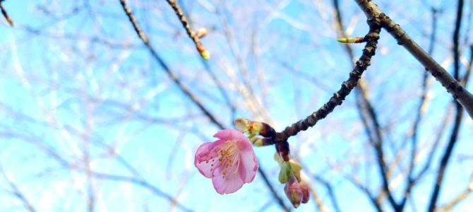 花寿庵4月のレッスンご案内