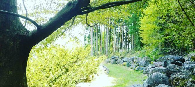 4/27花あそび「不安と信頼」