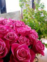 「開花」する仲間たち